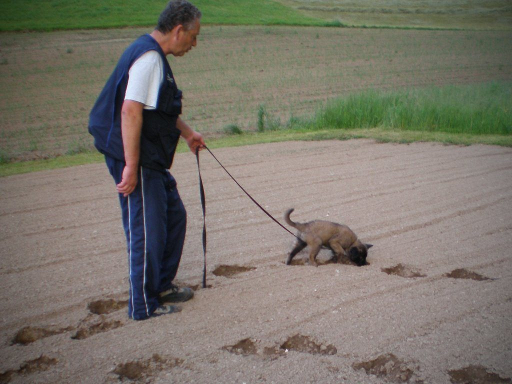 mario-hundetrainer-hundeschule-welpenschulung-02