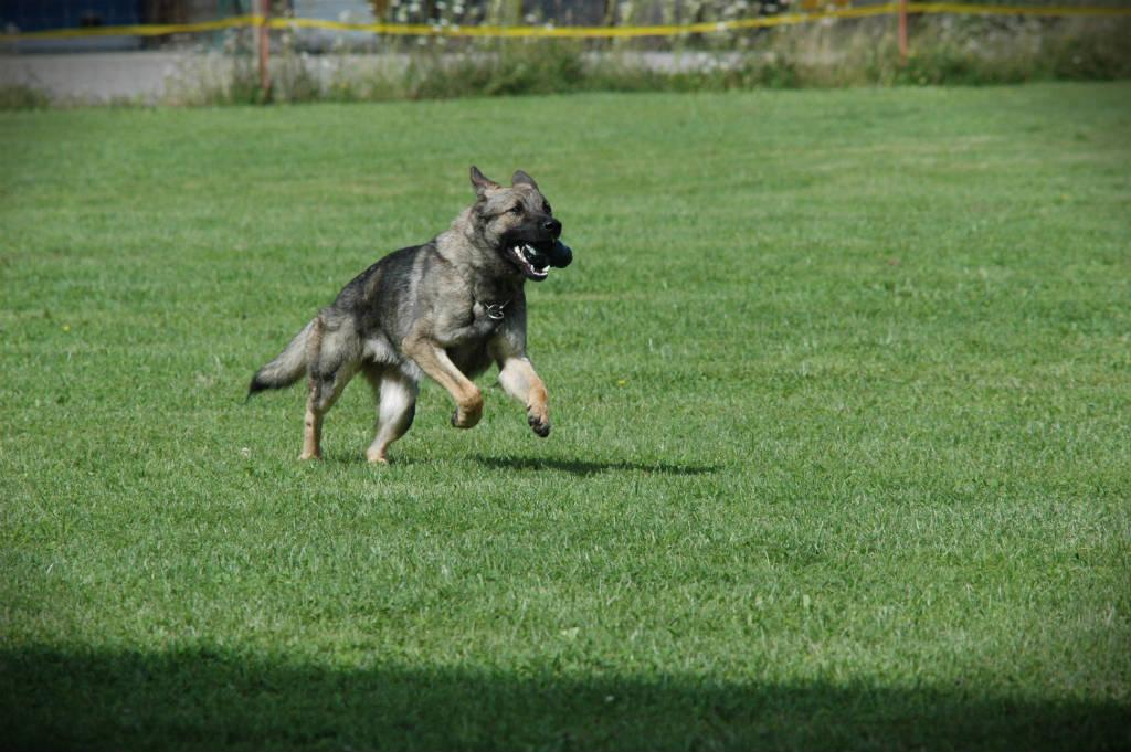 mario-hundetrainer-hundeschule-hundesport-apportieren-01