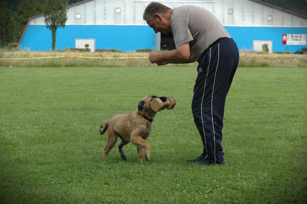 mario-hundetrainer-hundeschule-hundesport-apportieren-02