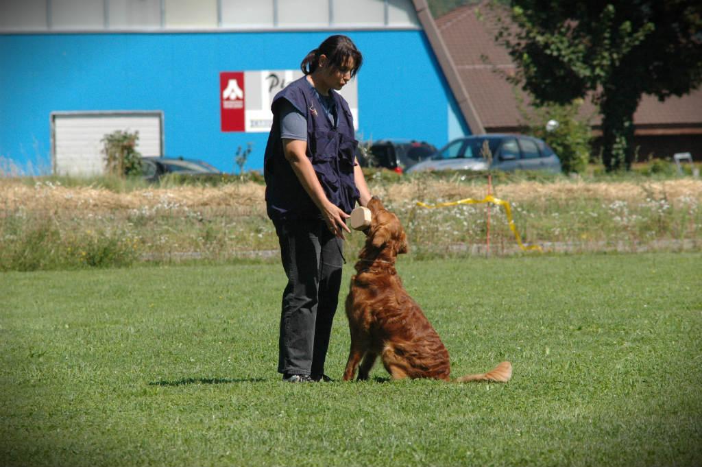 mario-hundetrainer-hundeschule-hundesport-apportieren-03