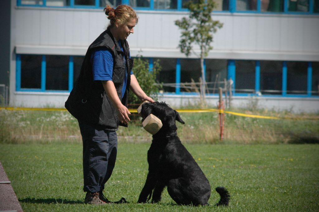 mario-hundetrainer-hundeschule-hundesport-apportieren-04