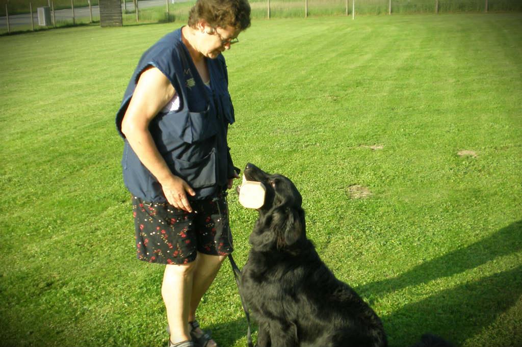 mario-hundetrainer-hundeschule-hundesport-apportieren-05