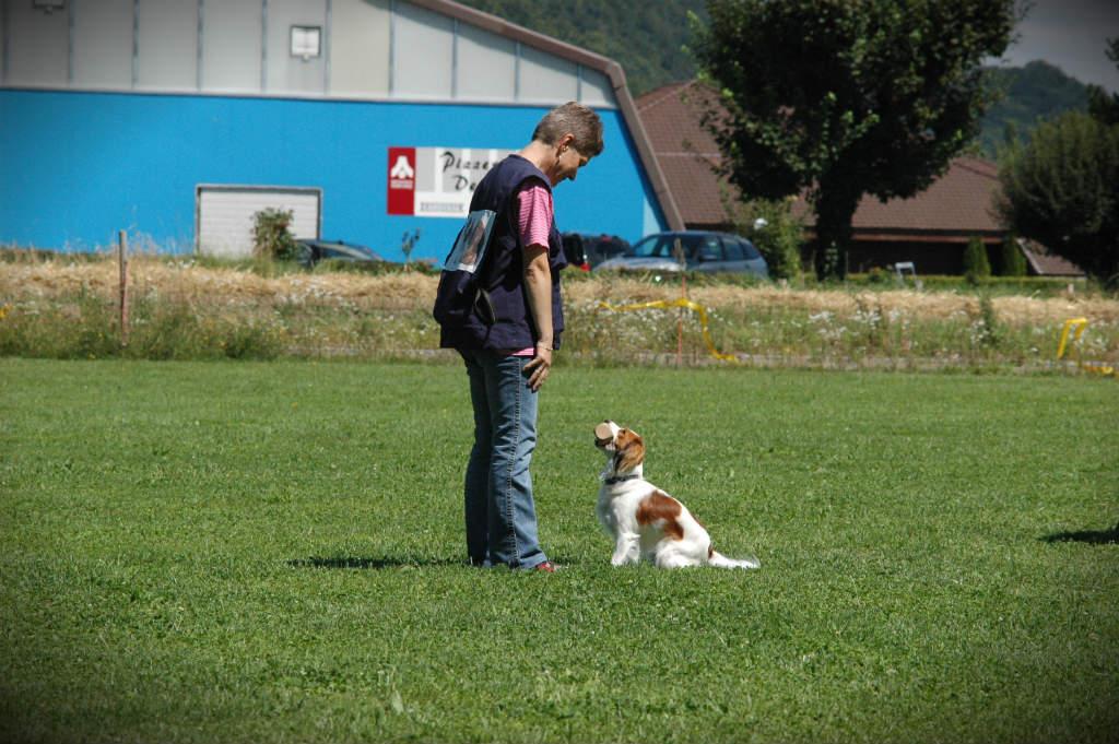 mario-hundetrainer-hundeschule-hundesport-apportieren-09