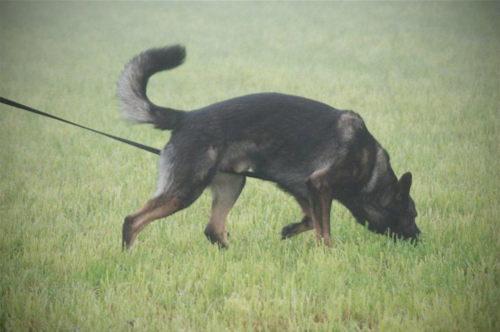 mario-hundetrainer-hundeschule-hundesport-fährten-01