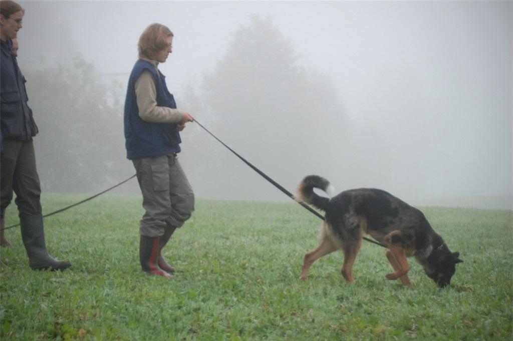 mario-hundetrainer-hundeschule-hundesport-fährten-03