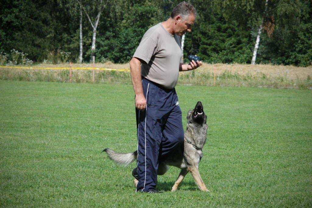 mario-hundetrainer-hundeschule-hundesport-unterordnung-01