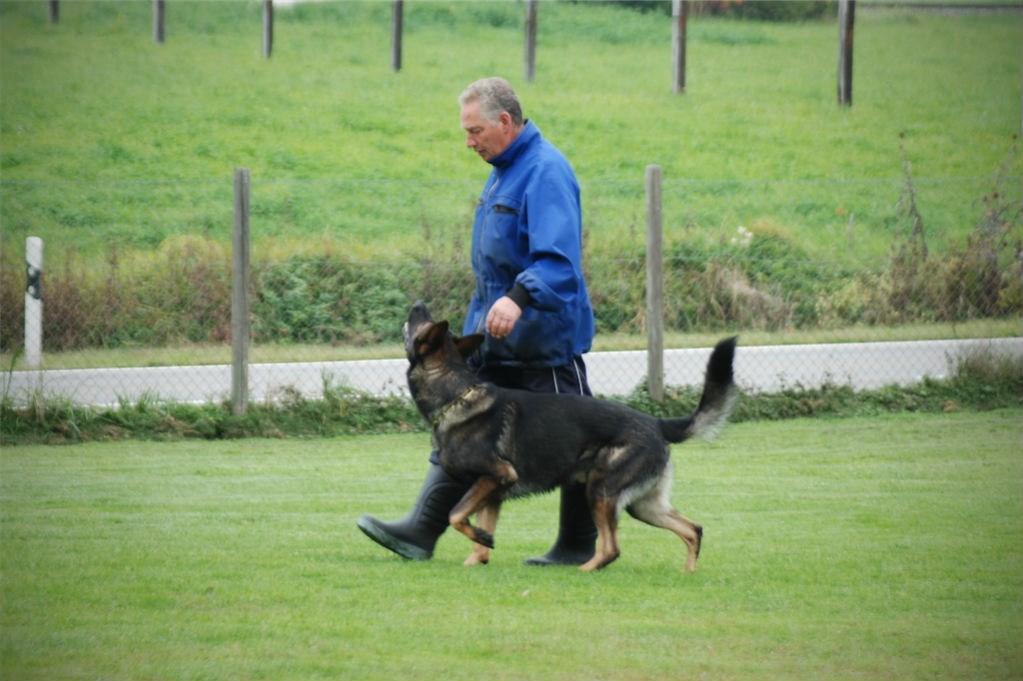 mario-hundetrainer-hundeschule-hundesport-unterordnung-02