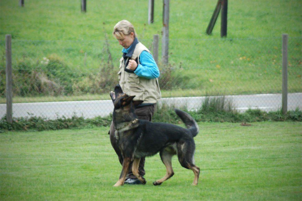 mario-hundetrainer-hundeschule-hundesport-unterordnung-04