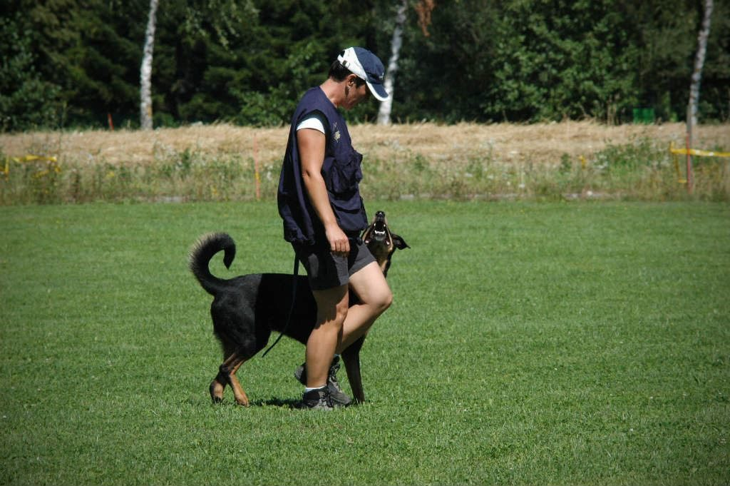 mario-hundetrainer-hundeschule-hundesport-unterordnung-05