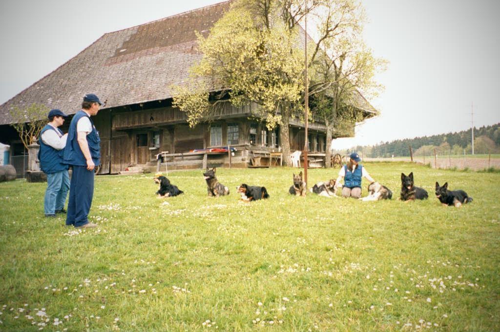 mario-hundetrainer-hundeschule-hundesport-unterordnung-09