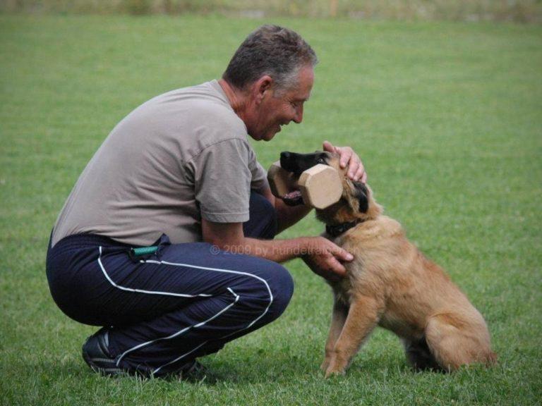 mario-hundetrainer-hundeschule-mit-hund-mexx