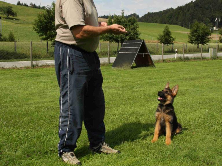 mario-hundetrainer-hundeschule-welpenschulung-01